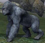 Race gorilla