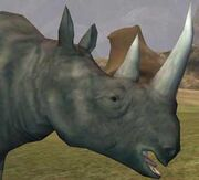 Race rhinoceros