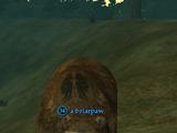 A briarpaw