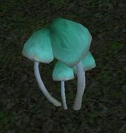 Goosecap-mushroom