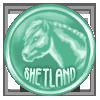 Shetland Coin