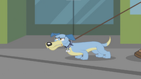 Dog barking to the music's beat EG2