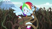 EG4 Pnącza oplatają Rainbow Dash