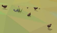 Chicken Habitat