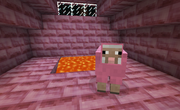 Pink temple sheep