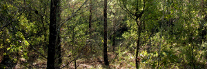 Forest panorama(2)