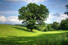 Tree-402953 1280