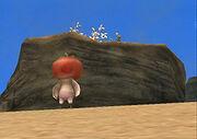 Tomate Perdido2