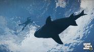 SharkV Noticias