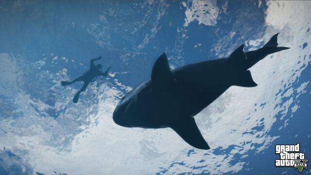 Archivo:SharkV Noticias.jpg