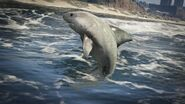 Tiburon gta v