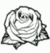 Ai Rosa