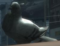 Rata Voladora IV