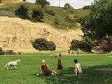 Parque para perros de Vinewood Hills