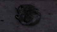 GatoAcurrucado