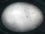 Huevo de hipogrifo