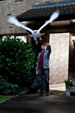 Harry-Potter-073