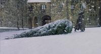 P1 Hagrid árbol de navidad