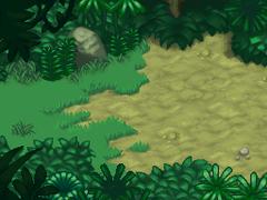 Selva Meridional Salida
