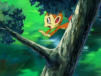 Archivo:EP520 Chimchar huyendo de los Zangoose.png