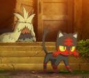 Torracat de Ash