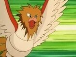 EP082 Spearow de Ritchie