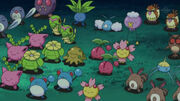 EP645 Pokémon salvajes