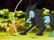 EP528 Luxray atacando a Pikachu