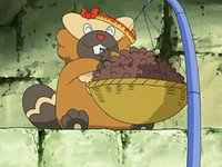 EP526 Bibarel comiendo
