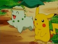 EP163 Chikorita junto a Pikachu