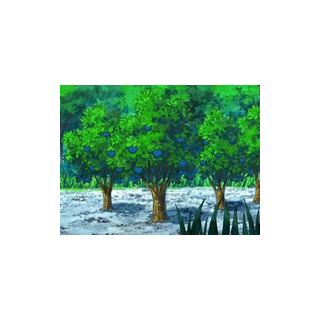 Árboles de bayas Aranja en el anime.