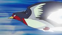 EP658 Swellow de Ash usando ataque rápido