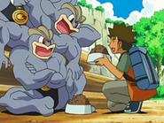 EP526 Brock dando de comer a los Machamp