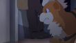 GEN02 Growlithe de Handsome