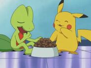EP297 Treecko y Pikachu comiendo
