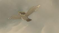 P08 Pidgeot