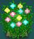 Planta colorida ROZA