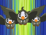 EP472 Starly