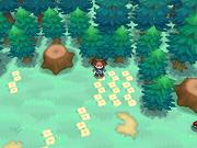 Hueco Bosque Perdidos