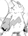 Zangoose de Enta