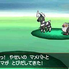 Aparición de 2 Pokémon salvajes en <a href=