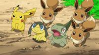EP797 Eevee conociendo a Pikachu, Axew y Helioptile