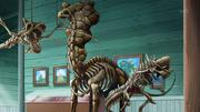 EP944 Esqueletos Pokémon