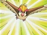 EP133 Pidgeot usando ataque rapido
