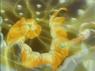 EP005 Pikachu usando rayo