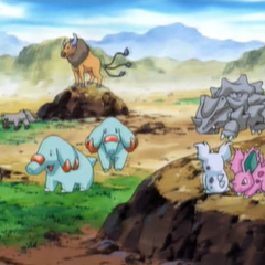 EP383 Pokemon salvajes (1).png