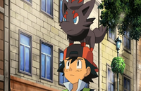 P13 Zorua sobre la gorra de Ash