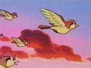 EP083 Pidgeot marchandose con su manada