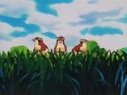 EP001 Pidgeys en un árbol