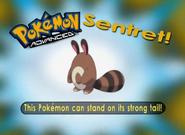 EP294 Pokémon